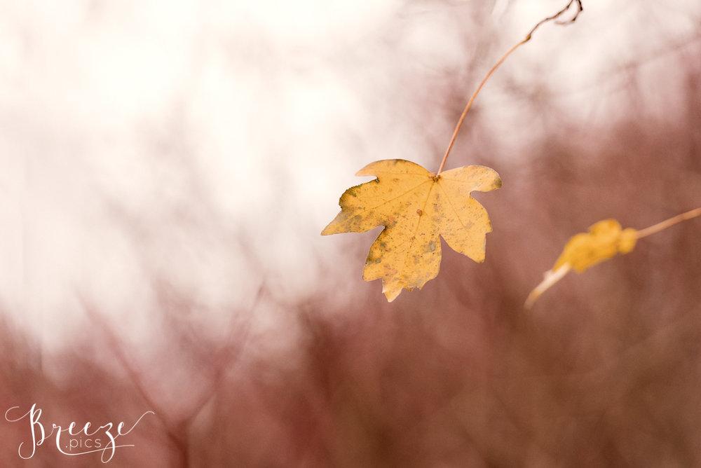 Autumn Leaf Red Background, Wall Print, Breeze Pics
