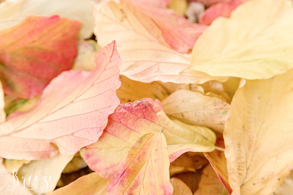Scattered Autumn Leaves, Nature Photography, Wall Decor, Bernadette Meyers
