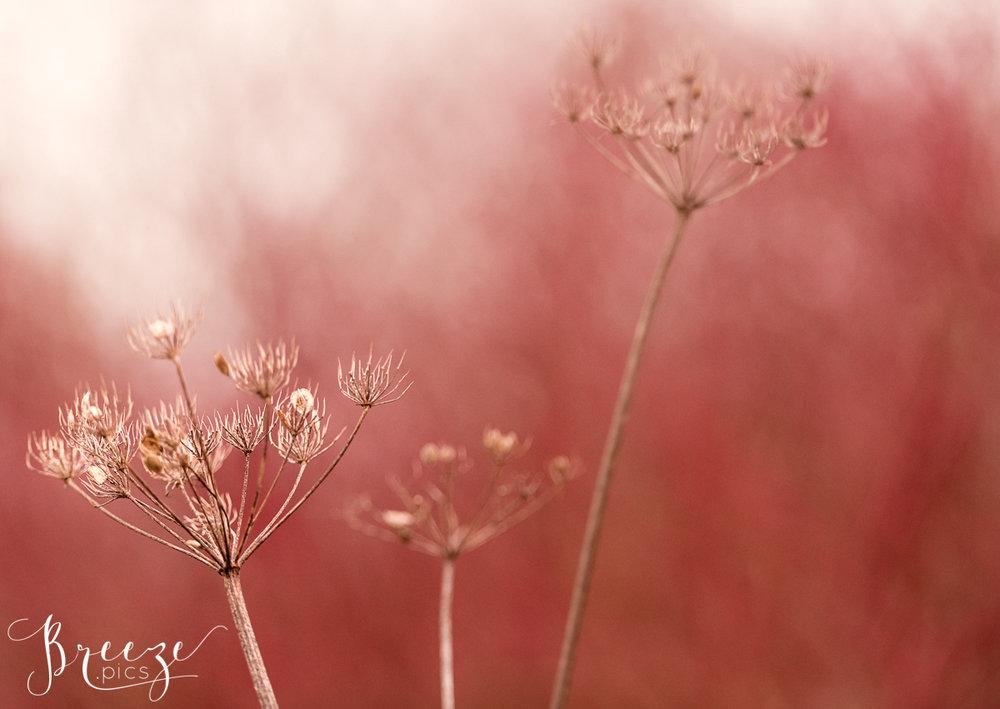 Red Autumn Seedpods, Macro Nature Photography, Fine Art Limited Edition Home Decor Print, Bernadette Meyers
