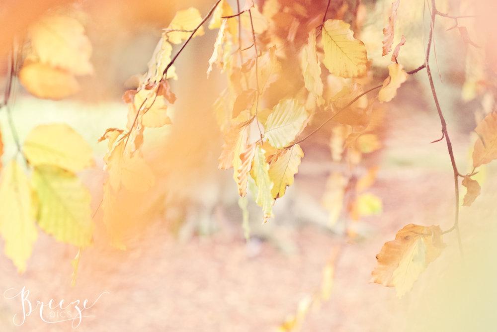 Autumn Leaves Fine Art Macro Photograph, Wall Decor, Bernadette Meyers