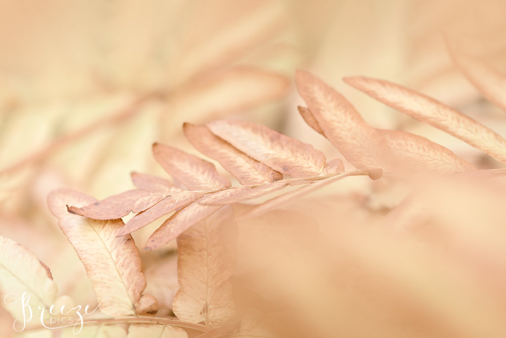 Autumn Leaf Macro Photograph, Limited Edition Fine Art Print, Bernadette Meyers