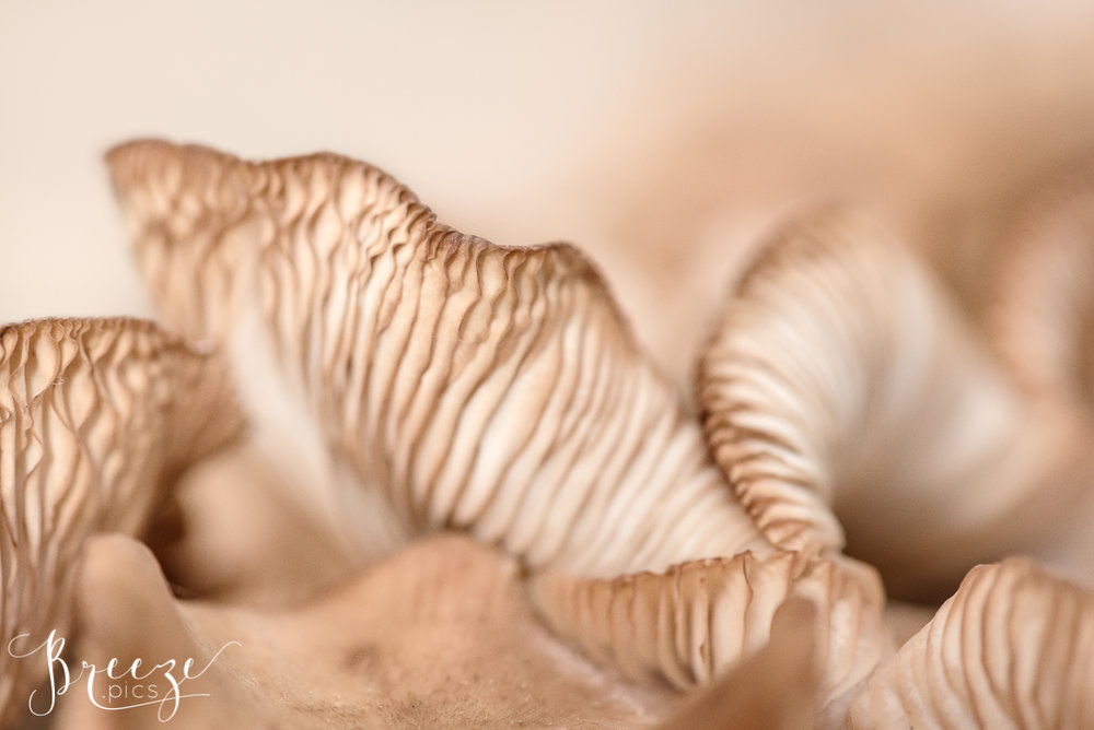 Macro Nature Photograph, Limited Edition Fine Art Print, Breeze Pics