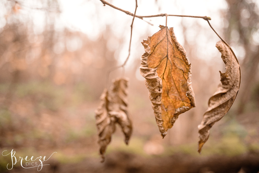 Autumn Leaf Study, Home Wall Art, Breeze Pics