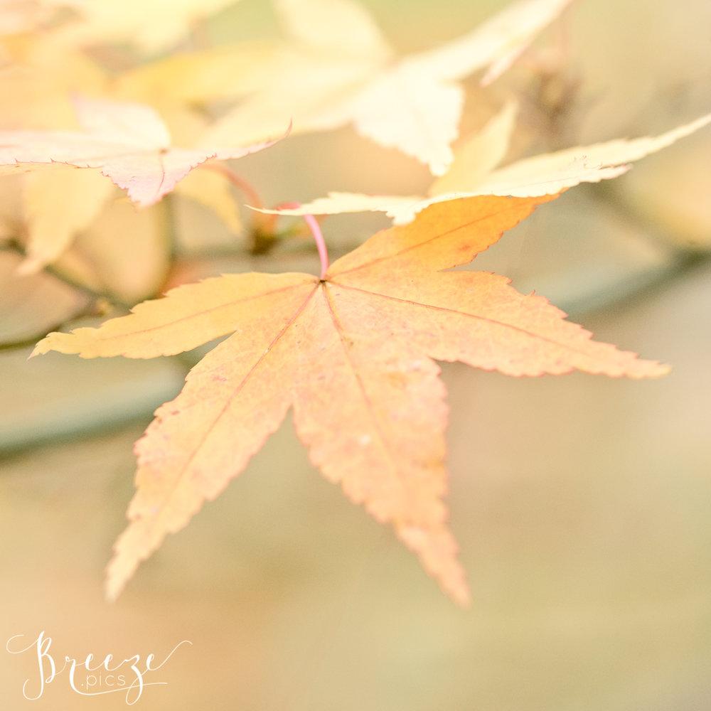 Autumn Leaf Macro Nature Photograph Study, Limited Edition Fine Art Print, Bernadette Meyers