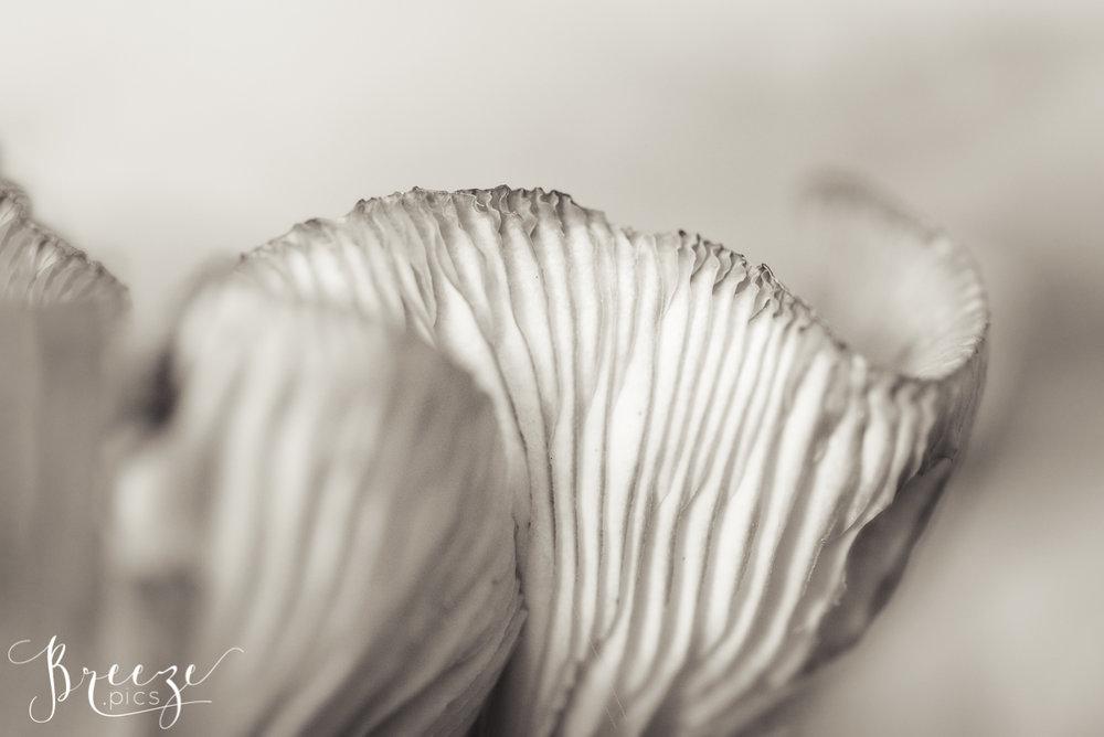 Black and White Fungi Detail, Fine Art Macro Nature Photograph, Bernadette Meyers