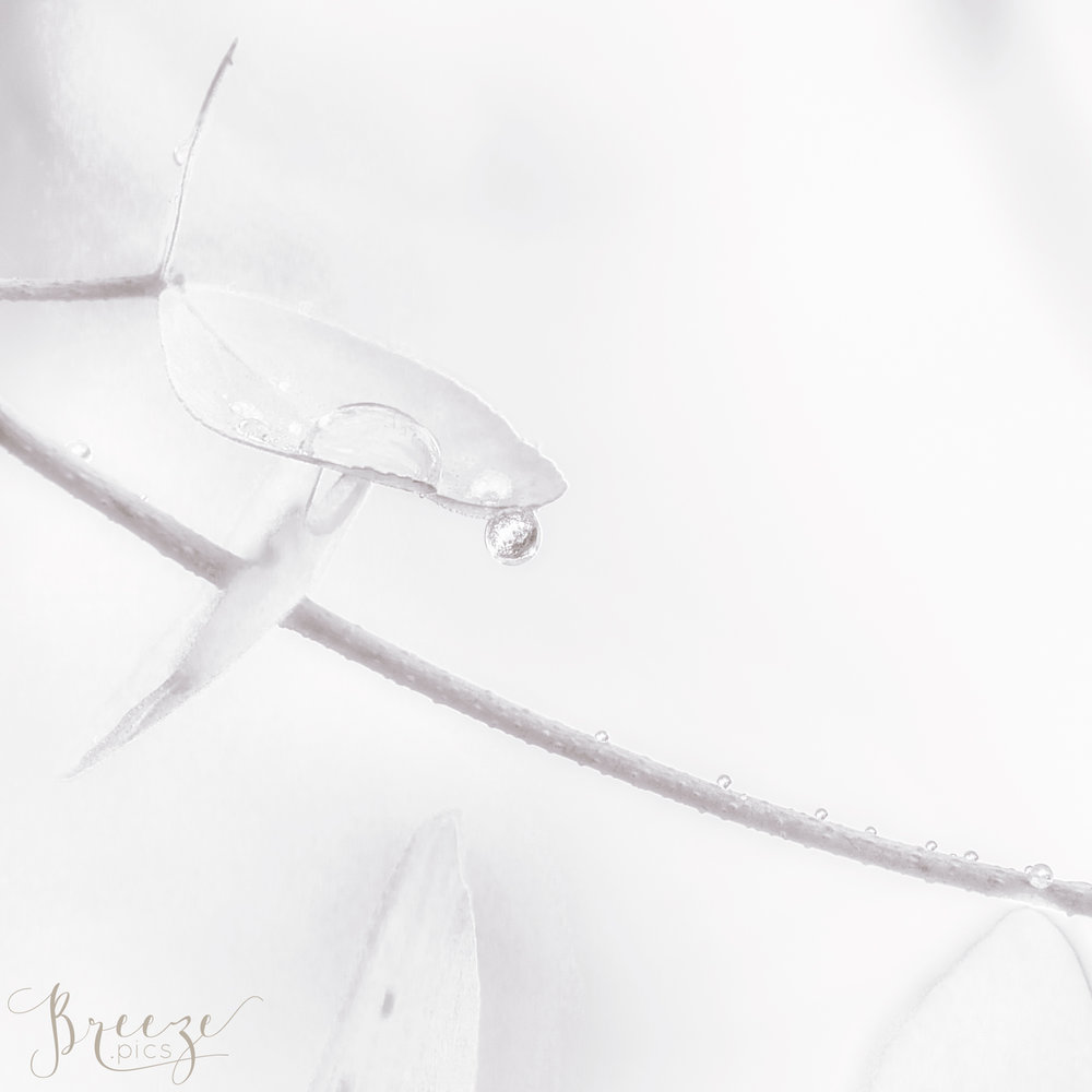 Grey fine art macro nature photograph, limited edition wall art, Bernadette Meyers, Breeze Pics