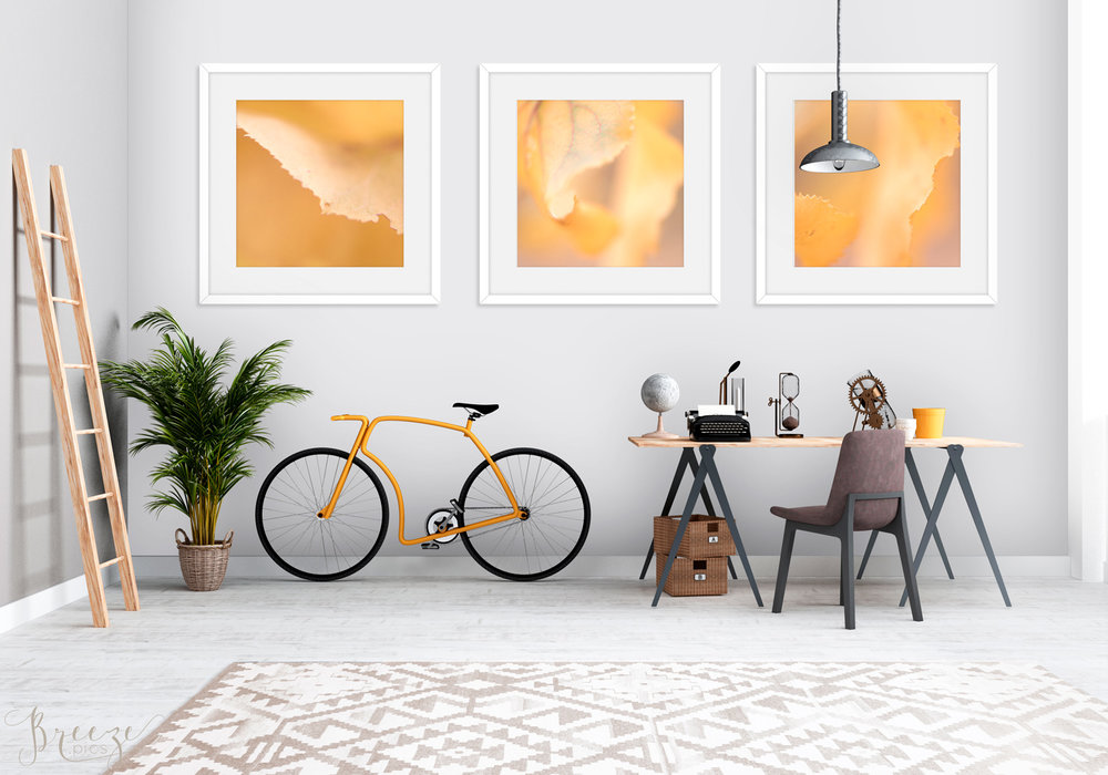 Orange fine art nature photograph, home decor prints, Breeze pics