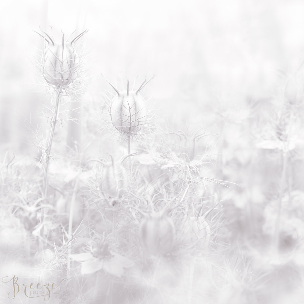love mist limited edition fine art print