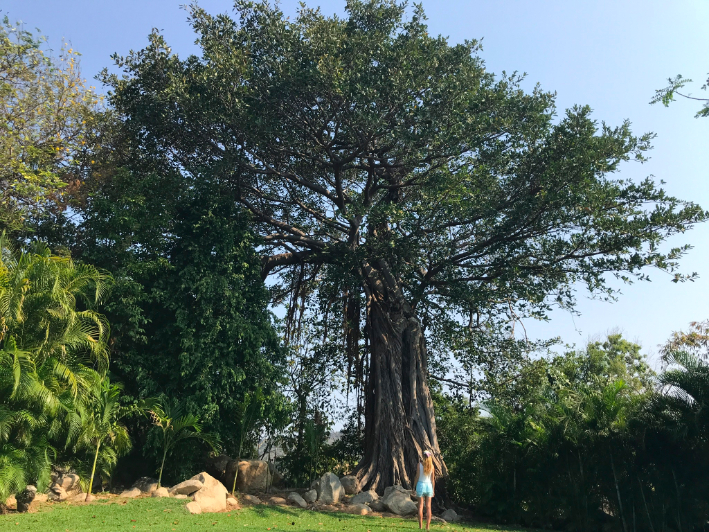 On the entire resort property, this was my favorite spot. I loved this tree. I was so in love with how many years old this tree must have existed with its grand roots, heights and beauty.