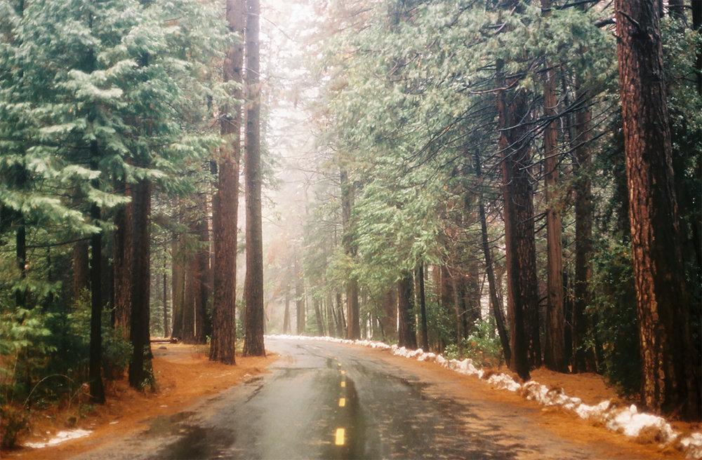 Yosemite Trees- for print.jpg