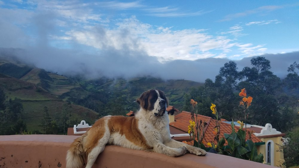 Baloo, the proprietor of Hostal Llullu Lama, Insinliví, Ecuador.