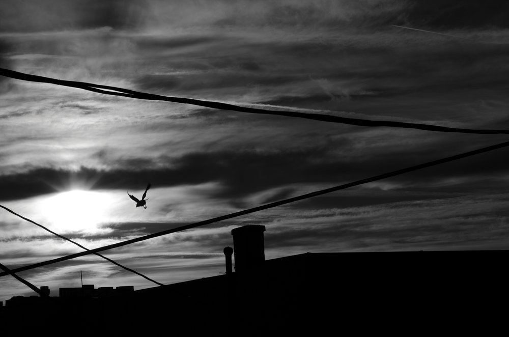 Sunset_Bird_BW-small-size.jpg