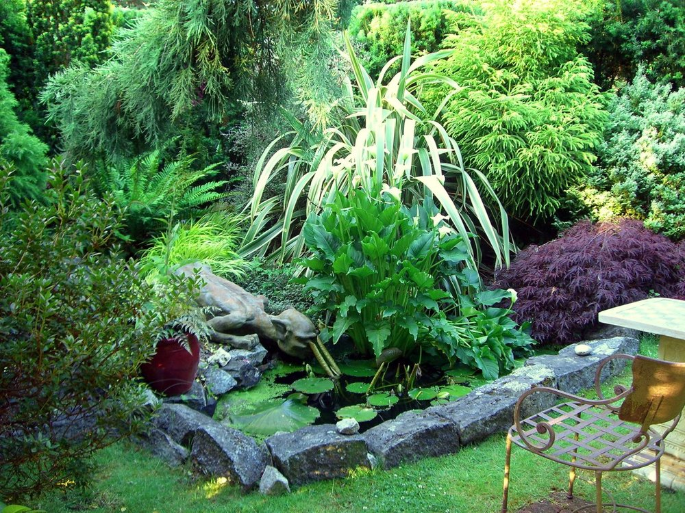 We had a secret garden, enclosed by a yew hedge that had a sweet little pond. We came here often to sit and to feed the fish, especially when our daughter was a little girl. We named all the fish and the gargoyle's name is Geoffrey.
