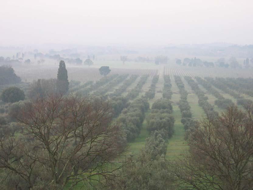 Hone in Tuscany.JPG