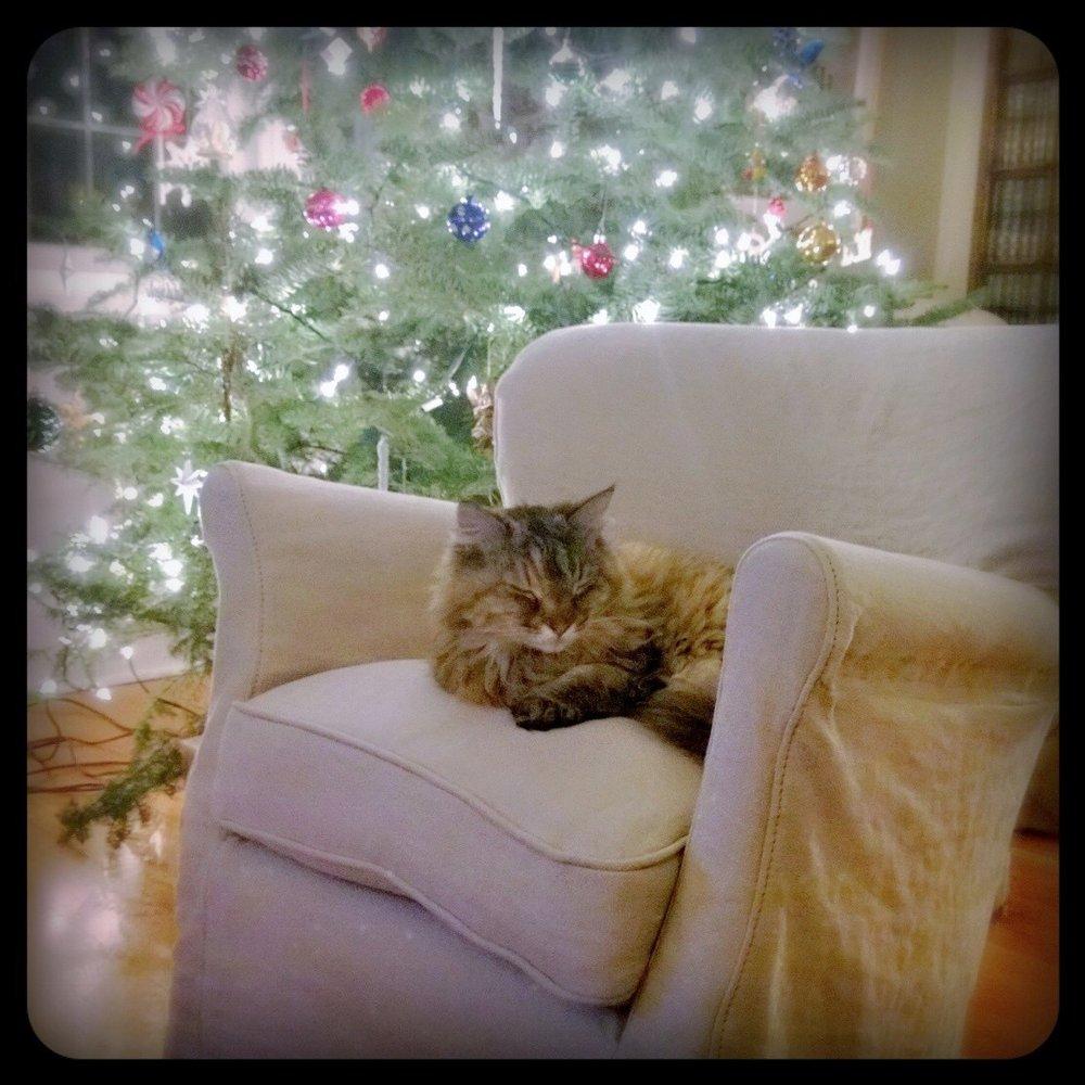 Christmas kitty, Happy girl.