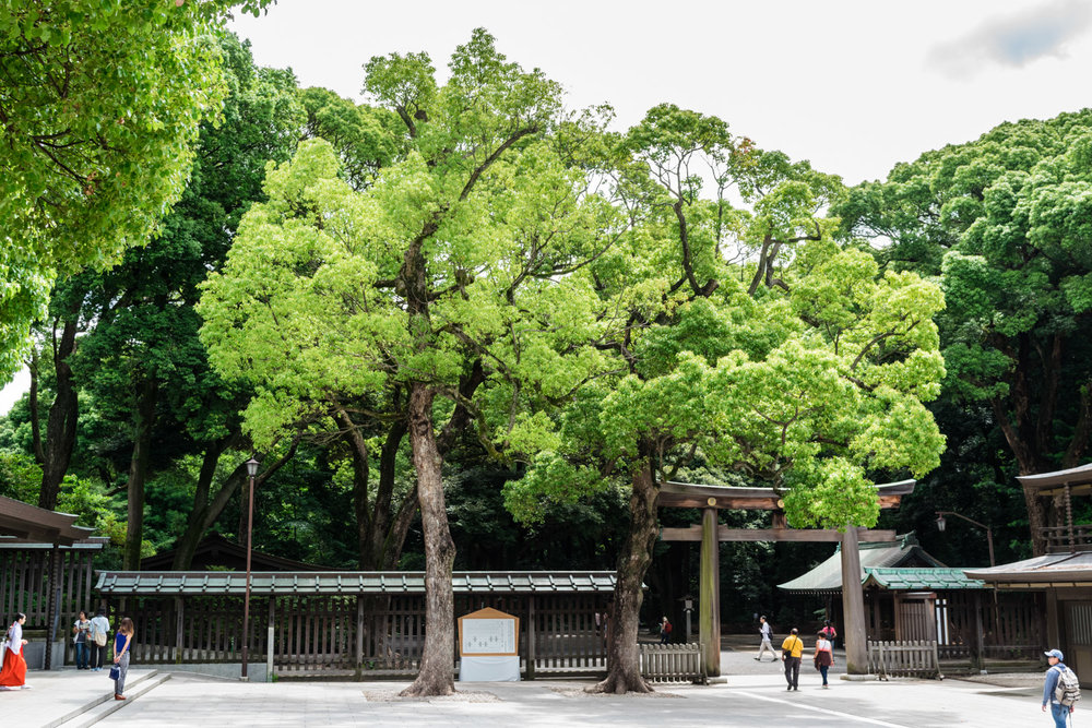 amaris-woo-tokyo-japan-meiji-shrine