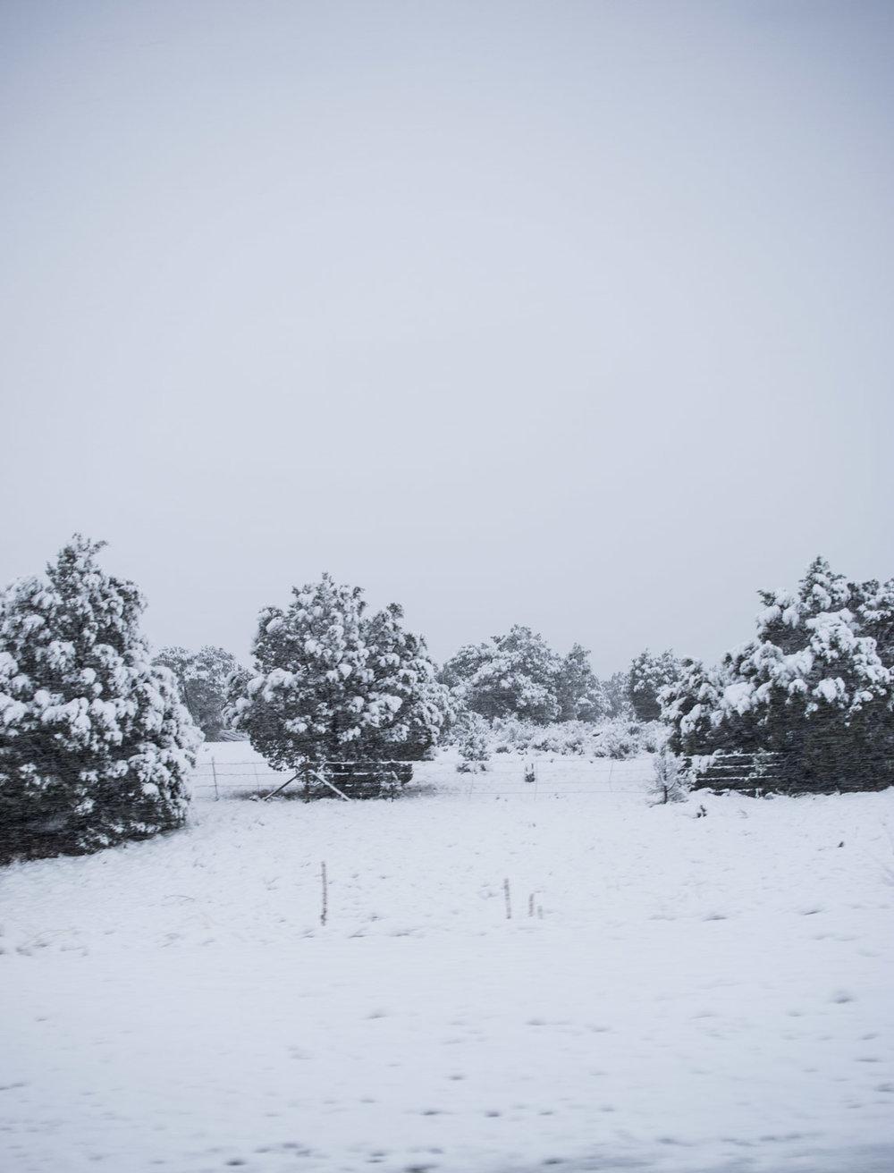 amaris-woo-photography-snow-arizona