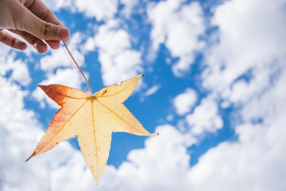 amaris-woo-university-pacific-stockton-autumn