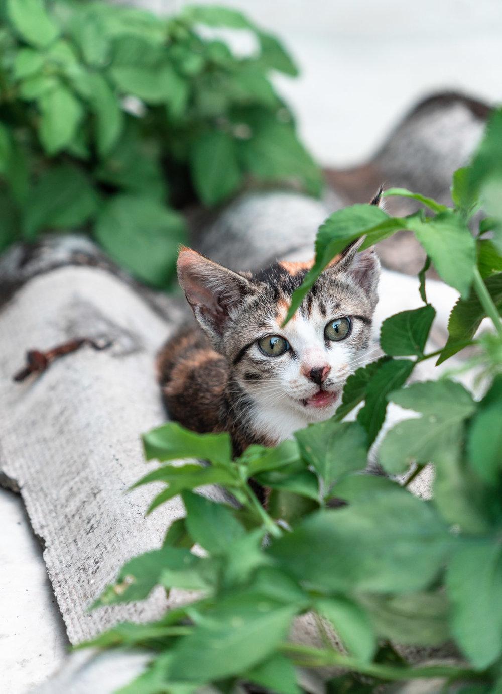 amaris-woo-photography-houtong-cat-village