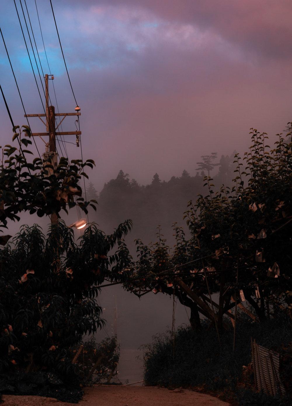 lishan-taiwan-fog