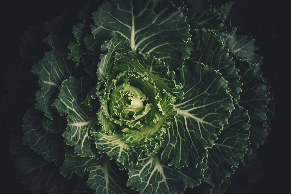 Culinary Nutrition Essentials -