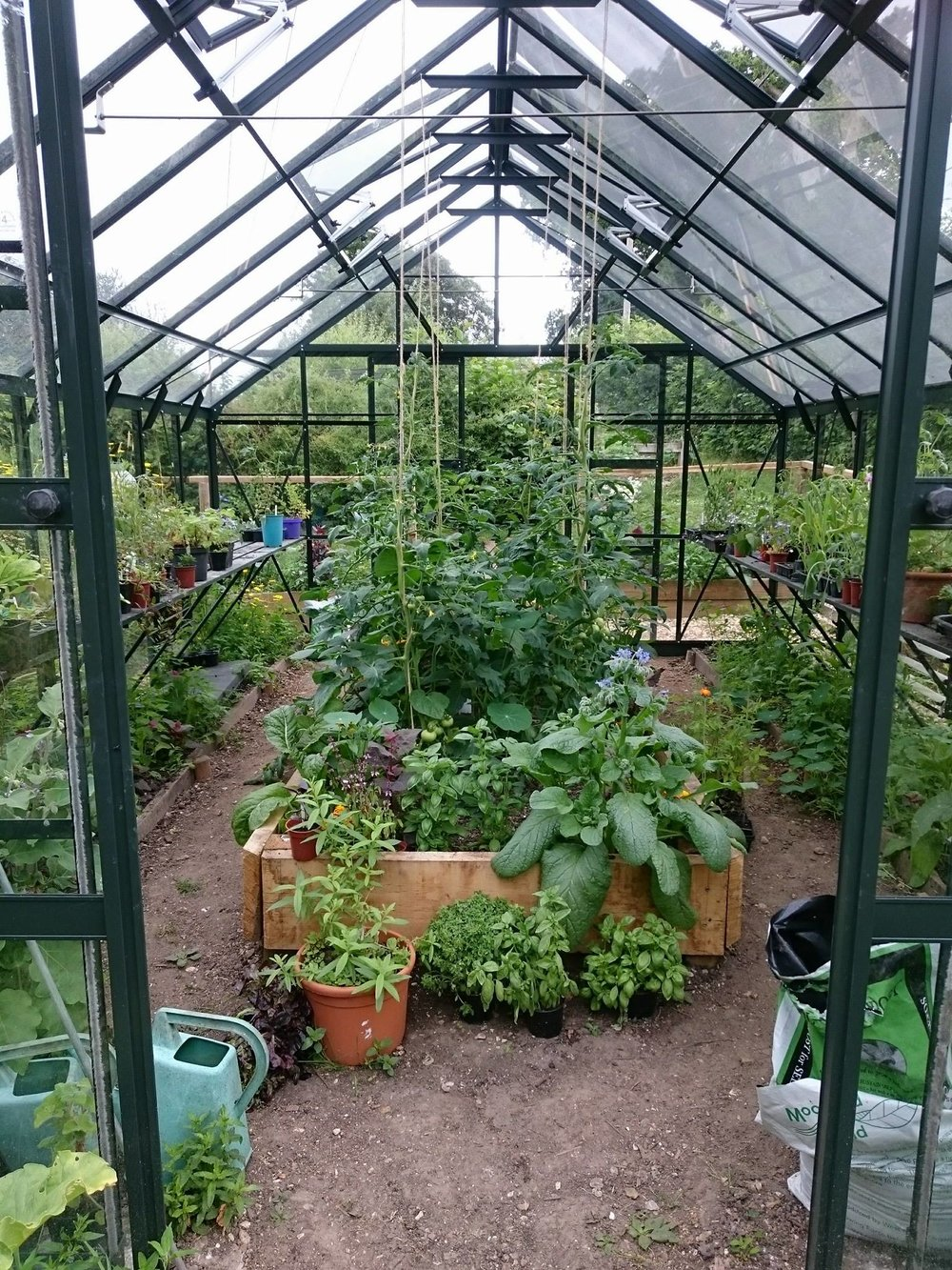Greenhouse, growing vegetables at Minstead Study Centre