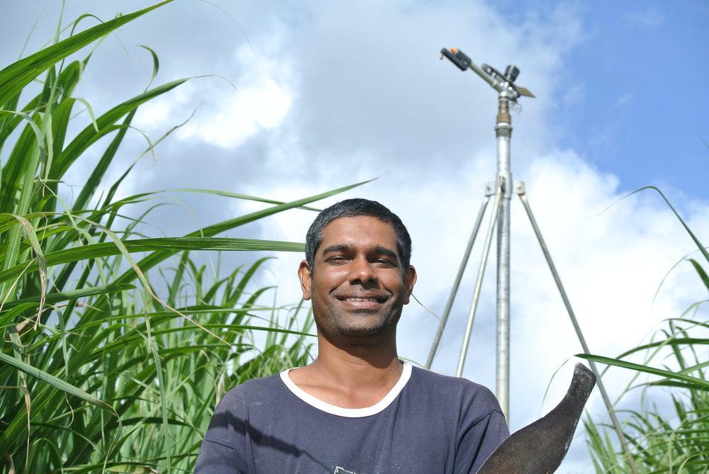 Mauritius sugar 1.JPG