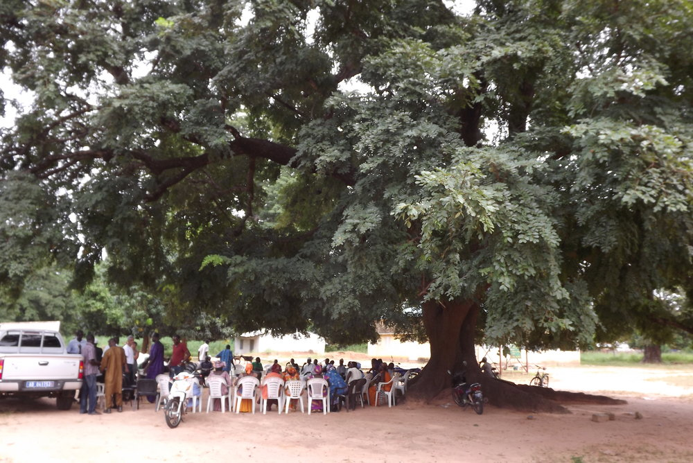 A community-wide meeting, under a ditakh tree