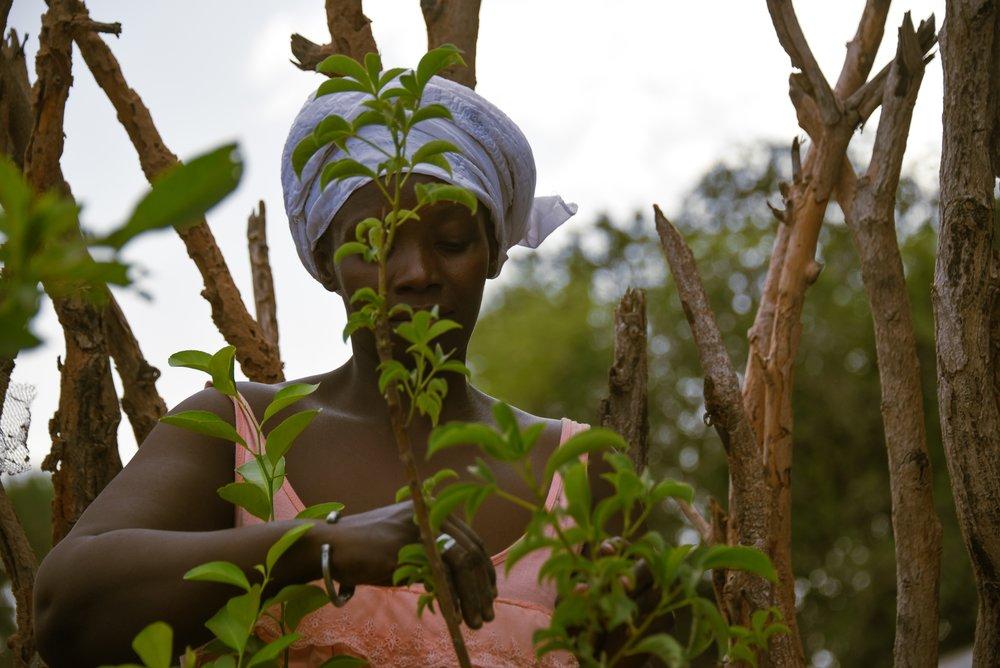 Ndella Badiane works in the community garden set up by the village association in Ouniock, Casamance. Credit: Traidcraft Exchange/Kate Dixon