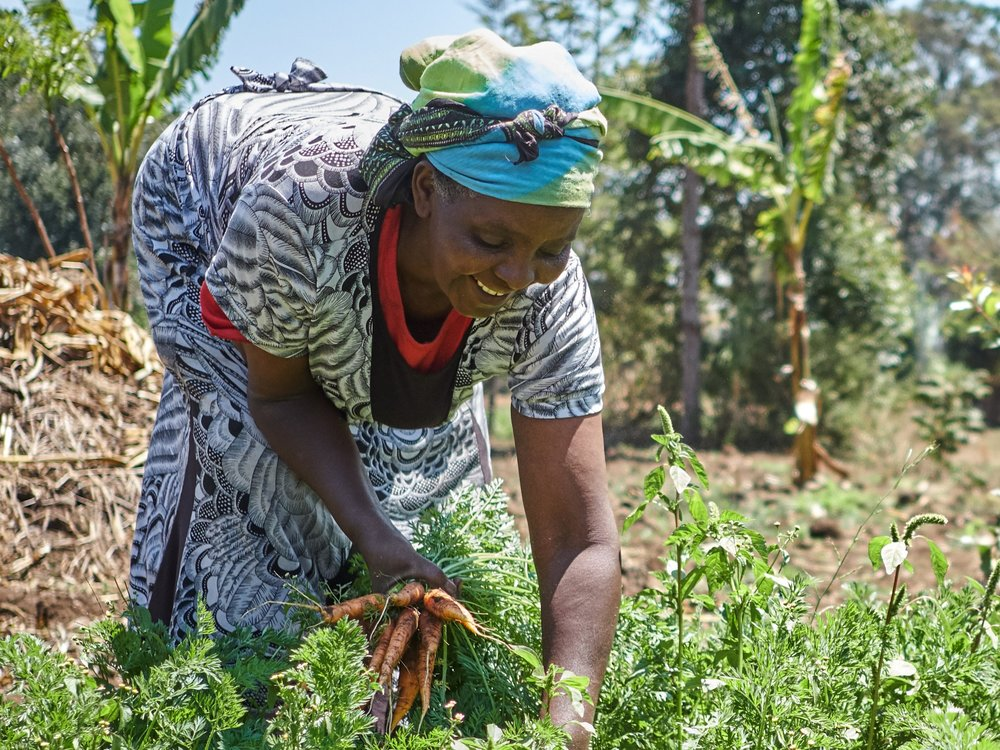 - Agnes Nkonge Gakii tends to her vegetable farm in Buuri.Credit: Traidcraft Exchange/Khadija Farah