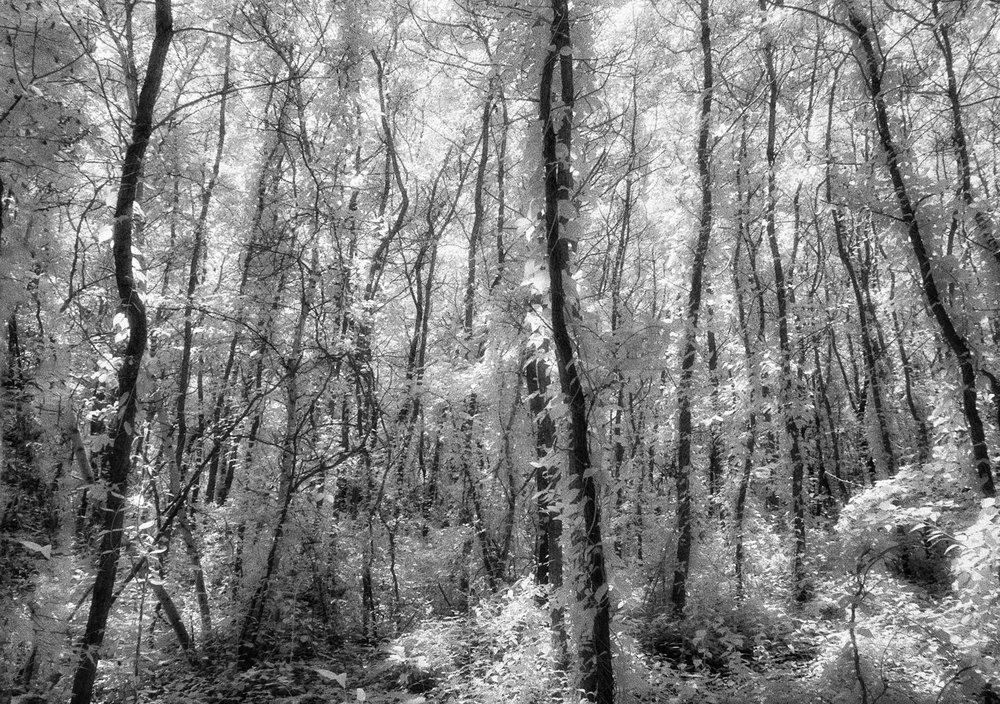 infrared-jungle-copy.jpg