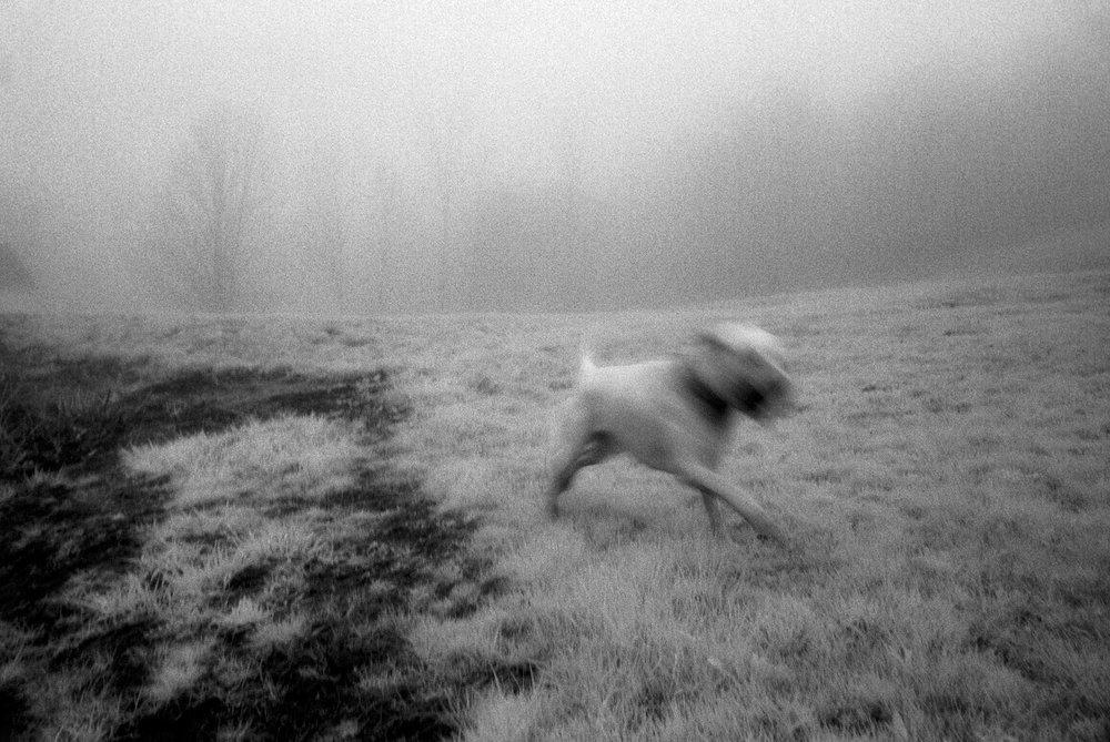 Infrared-dog.jpg