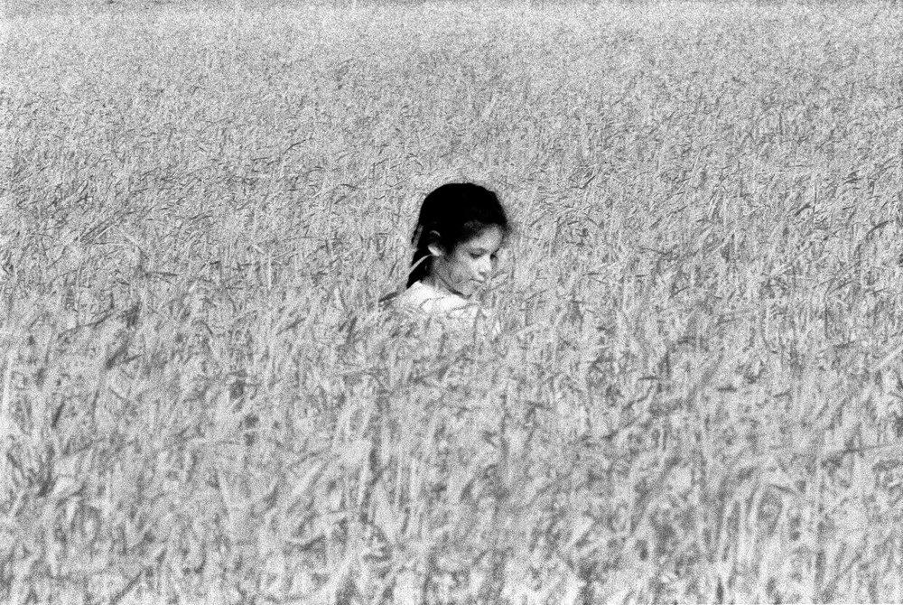 sabra-infrared-wheat-field-silver-fx.jpg
