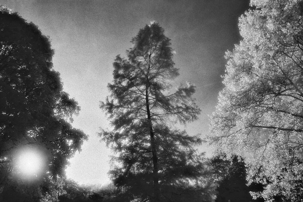 infrared-central-park-tree-halo-silver-fx.jpg