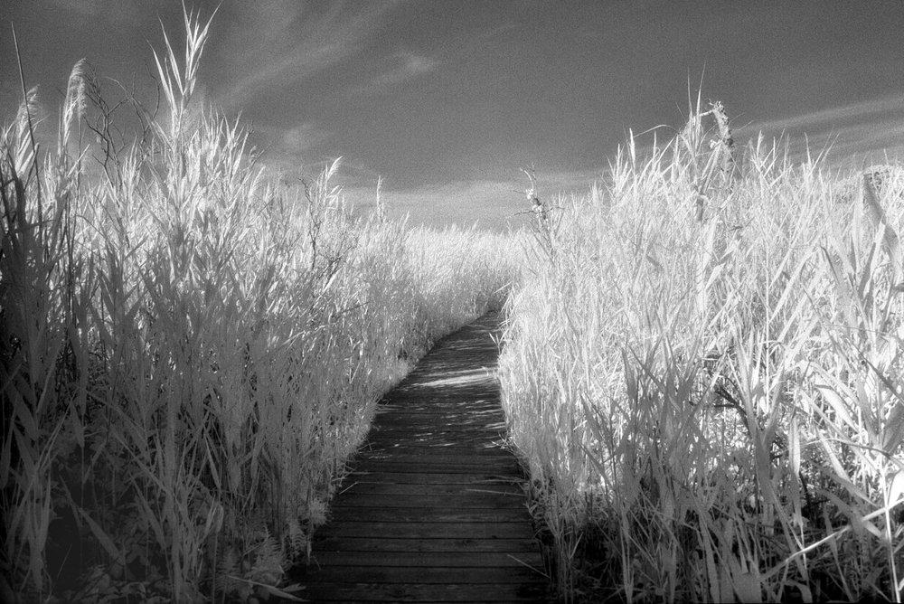 infrared-trail-16-FLAT.jpg