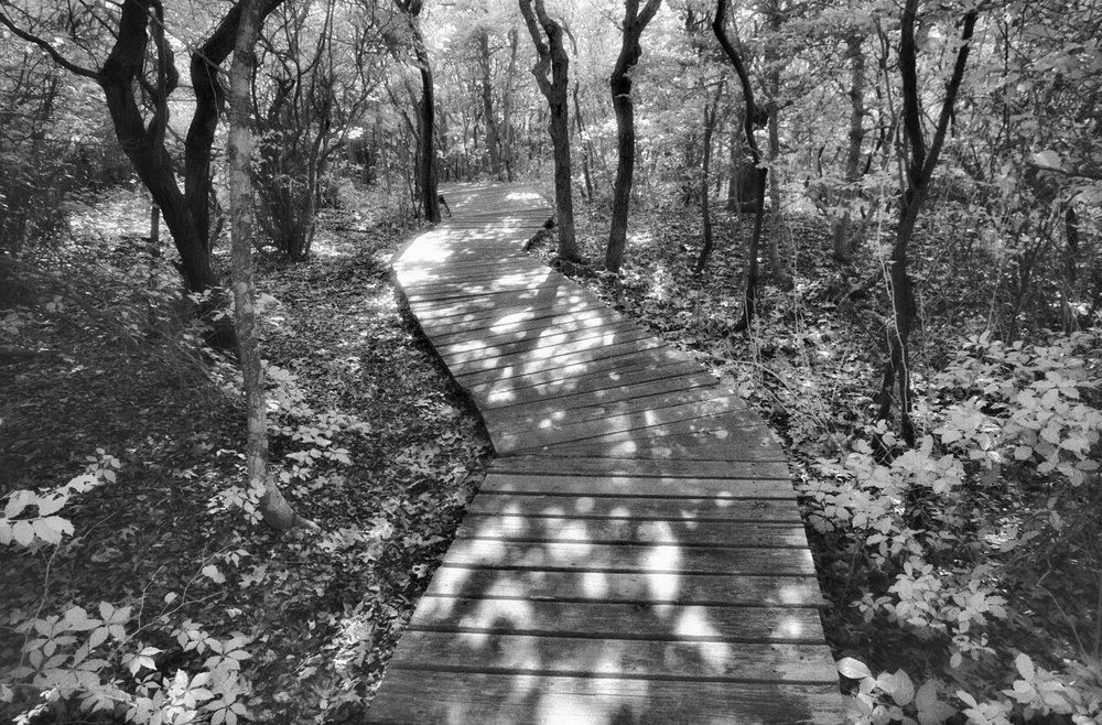 infrared-trail-sunken-forest-16.jpg