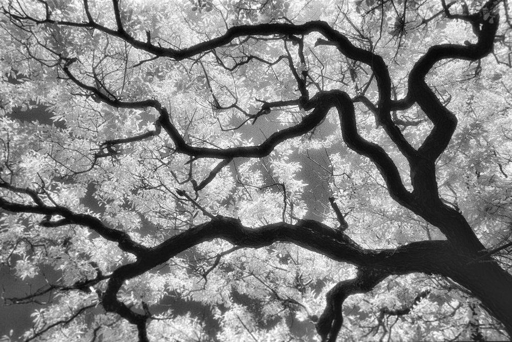 infrared-tree-16.jpg