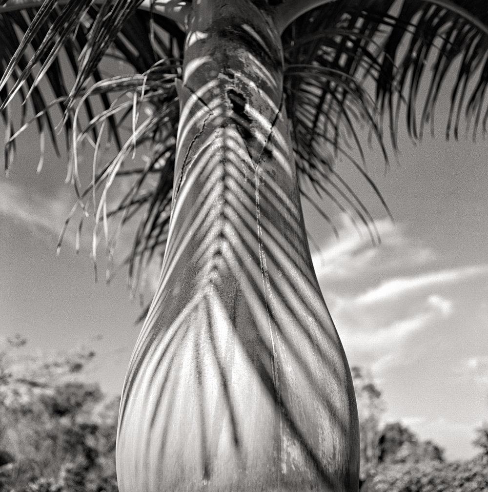 palm-shadow-tonal.jpg