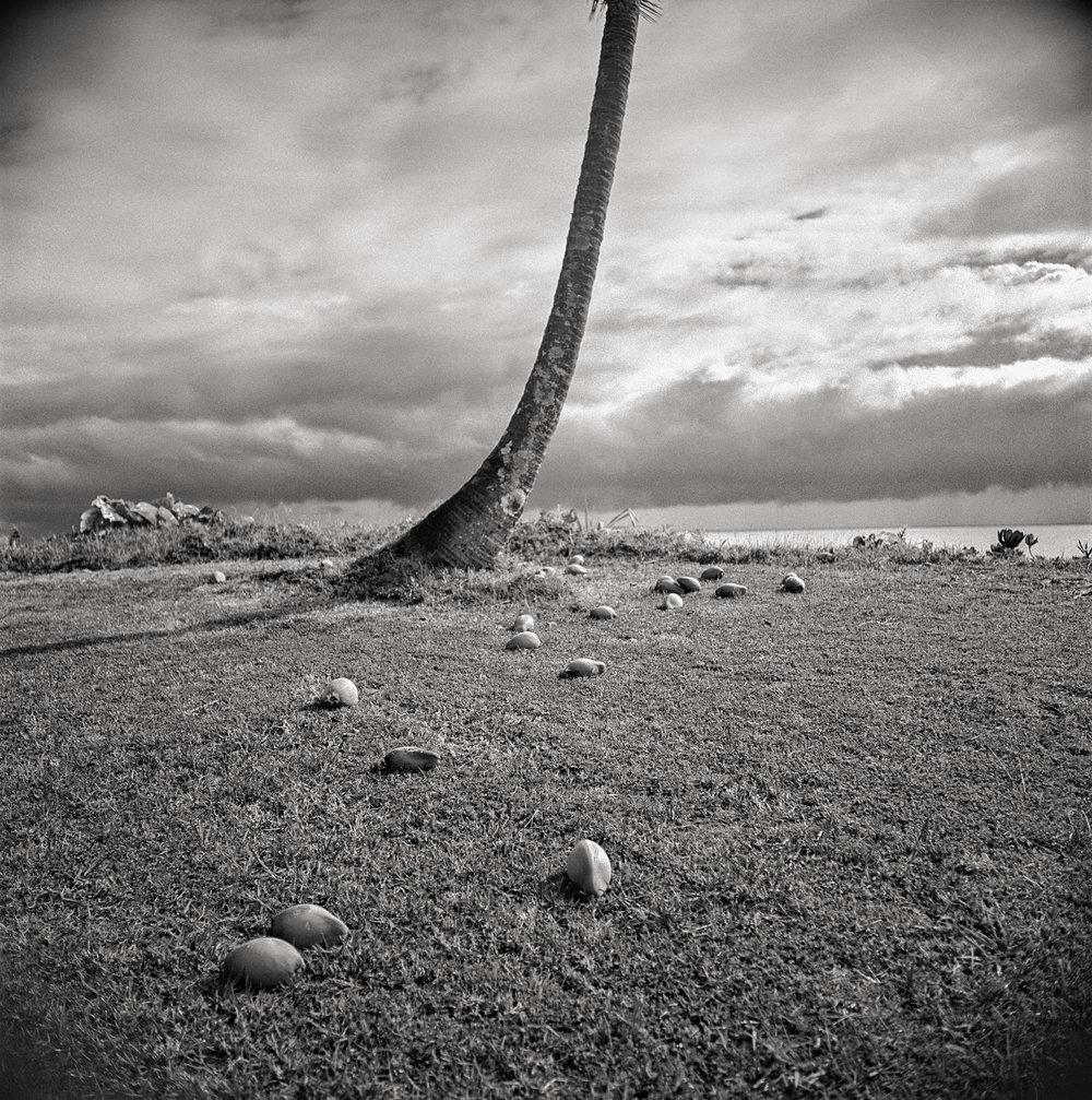 palm-&-coconuts.jpg