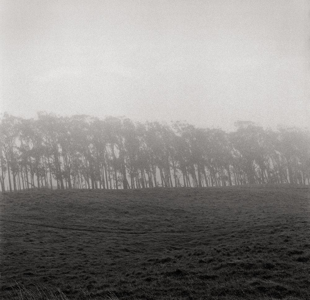 fog-and-trees-8-bit.jpg
