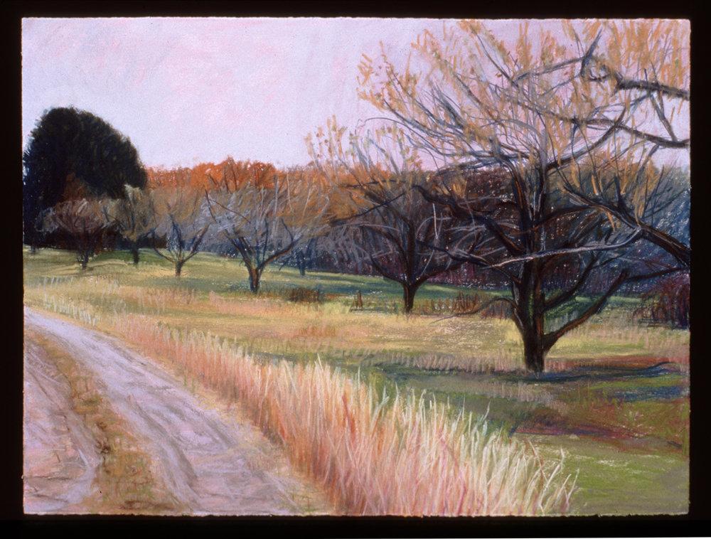 "Apple Groves   Pastel, 22x30"", 1998"