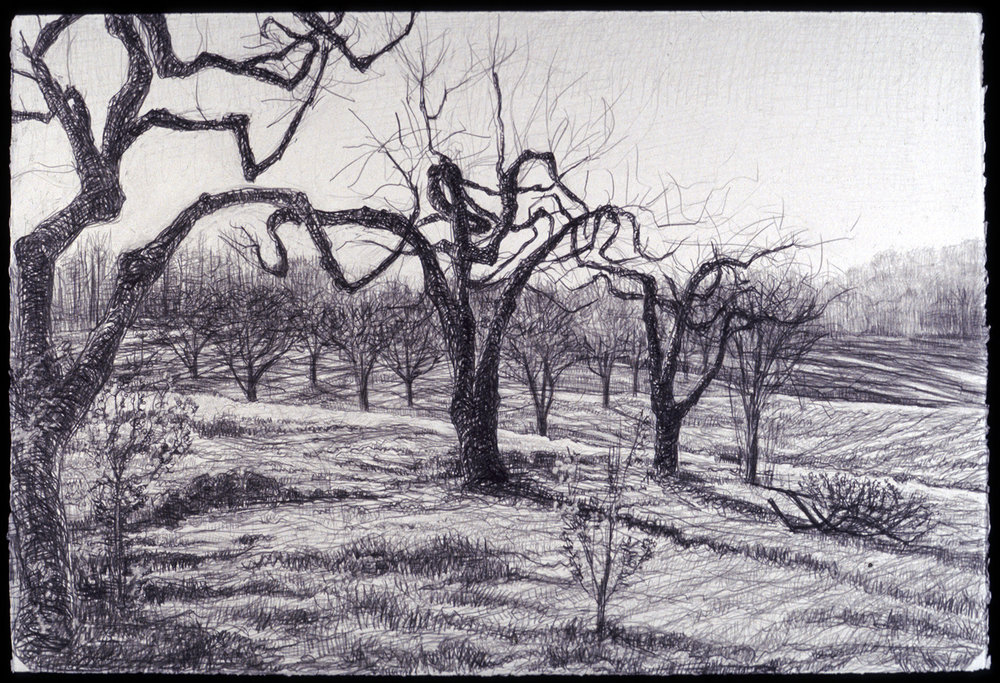 "Diagonal Orchard   Pencil, 15x22"", 1998"