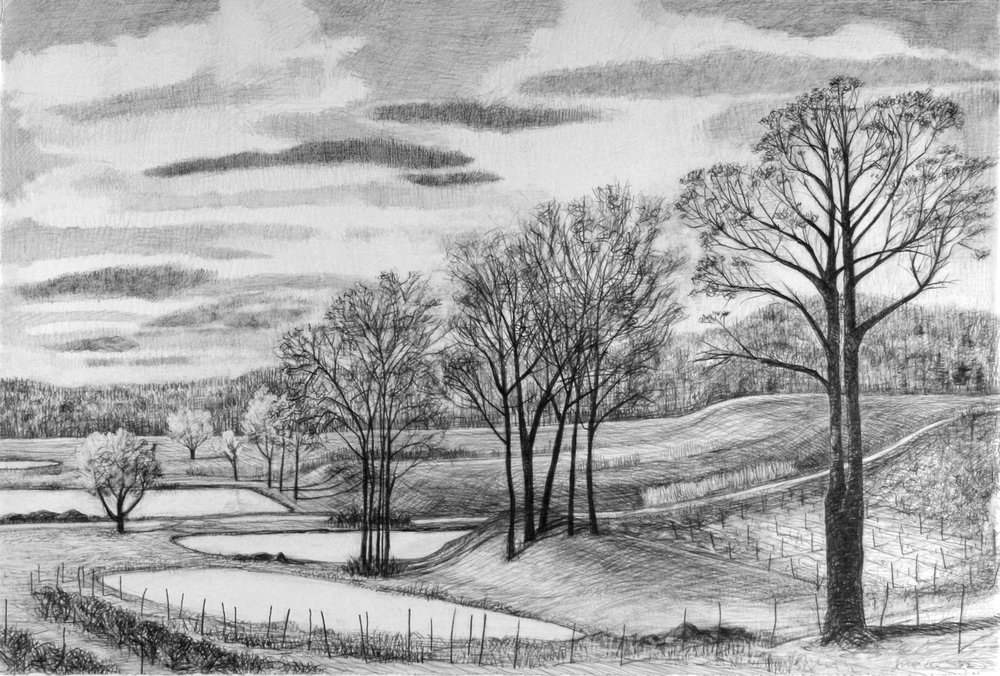"""Ponds at Belltown Orchard   Pencil, 15x22"""", 1998"""