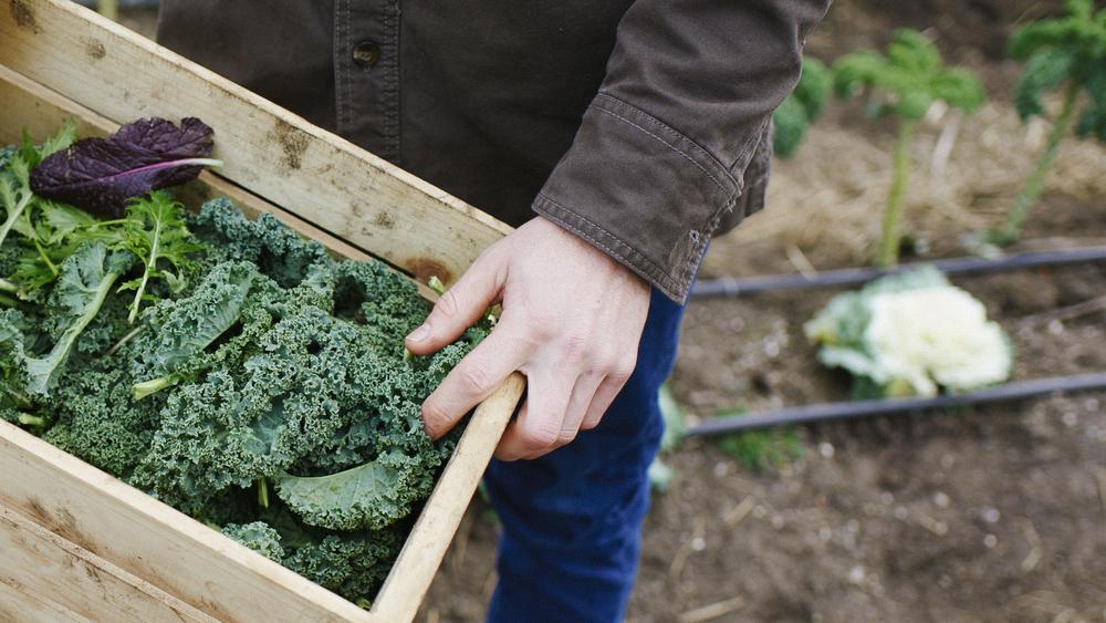 cabbage3.jpg