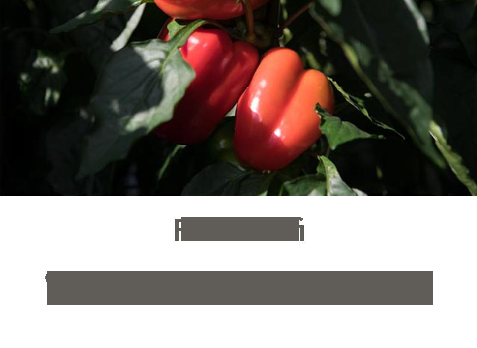 forsidumynd_fludajorfi.png