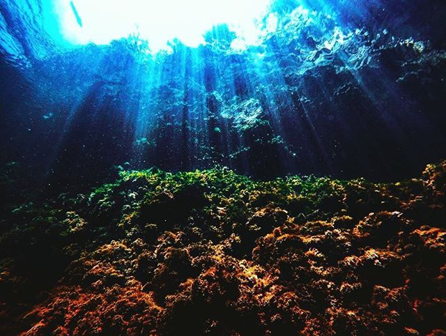 💫🌊 #underwater #photography #underwaterphotography #freelancephotographer #freelance #photography #blue #bluewater #instaphoto #instapic #picoftheday #instaphoto #travel #travelphotography #scuba #diving #scubadivng #padi #rescuediver #sealife #aquatica  #blue #sea #nationalgeographic #instapic #picoftheday