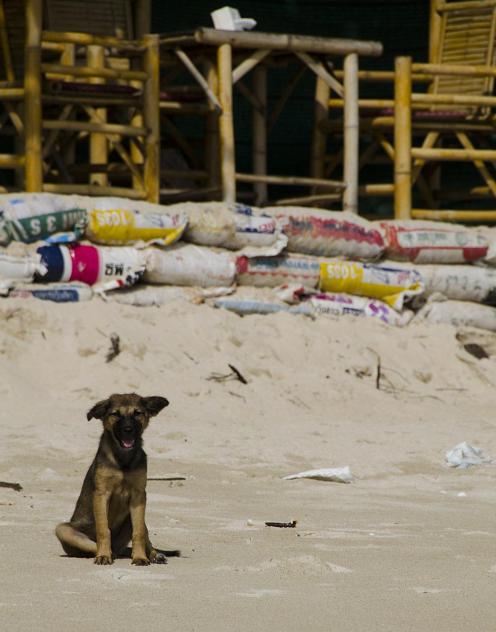 Spencer_Drake_Beach_Puppy_Photography_puppy_dog_beach_Thailand_travel_stray.jpg