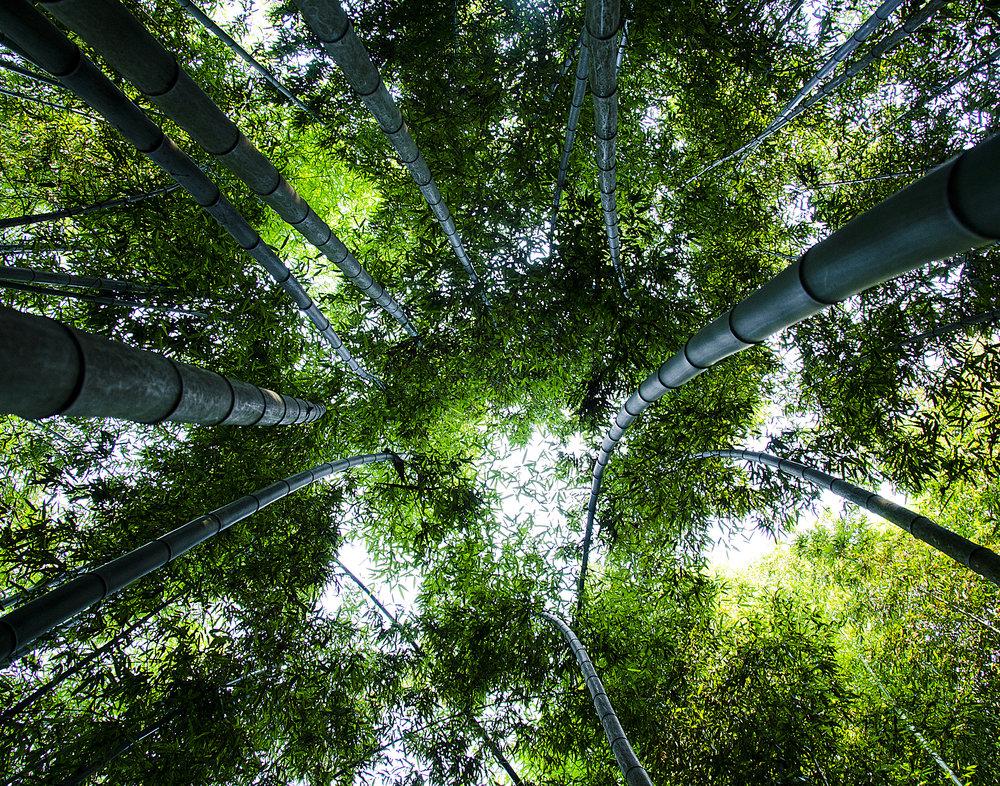 Spencer_Drake_Emerald_Serenity_Photography_Bamboo_Green_Forest_Korean_Trees_Nature_Travel.jpg