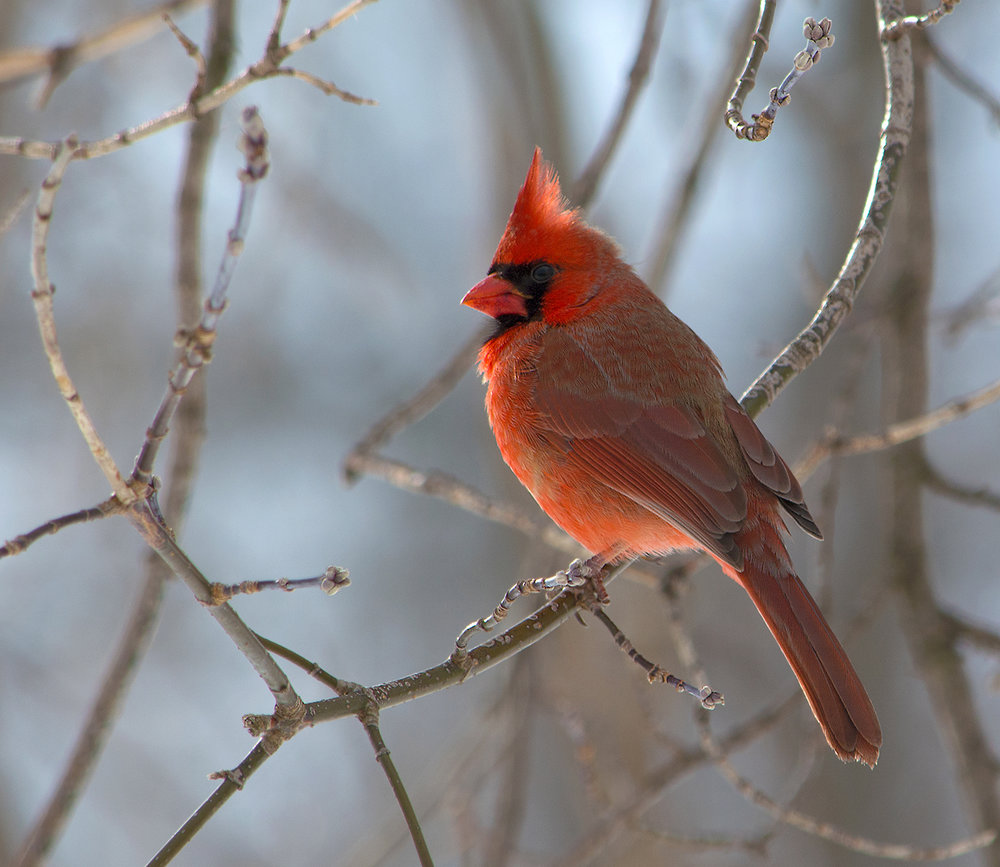 1_LON_Cardinal_LorraineKraayenbrinkDSC2548.jpg