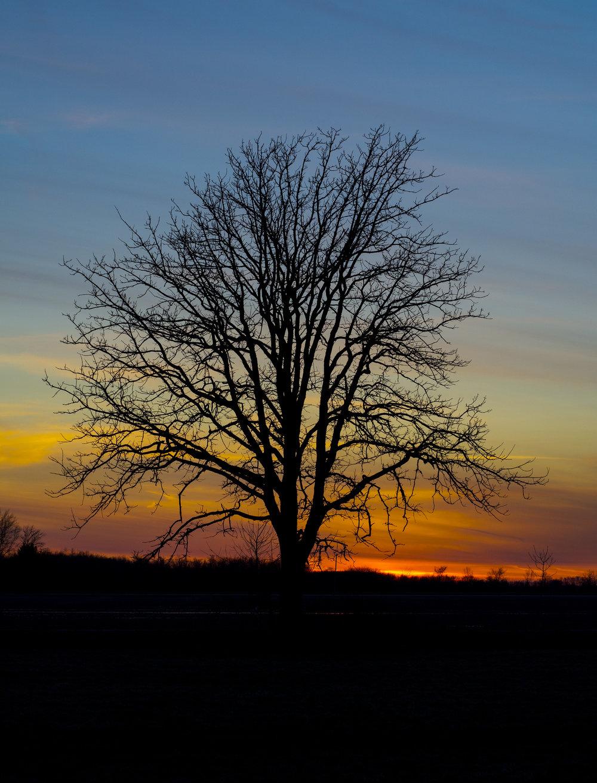 serenitree.jpg